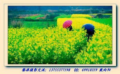 春天田园风光国画